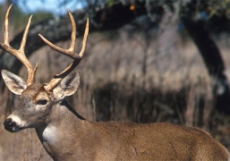 5 Tips for Avoiding Deer on the Road